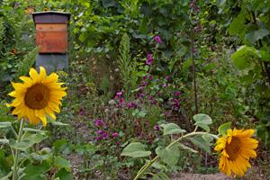 Bienen & Wein in inniger Eintracht